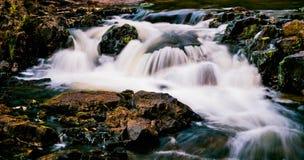 Песня природы Стоковые Фото