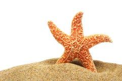 песок банка seastar стоковые изображения