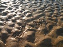 песок влажный Стоковые Изображения RF
