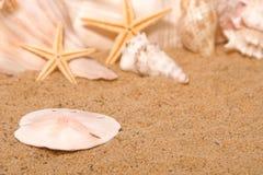 песок доллара Стоковое Изображение RF