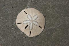 песок доллара Стоковая Фотография