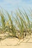 песок дюны пляжа Стоковая Фотография