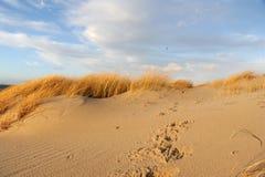 песок дюны Стоковые Фотографии RF