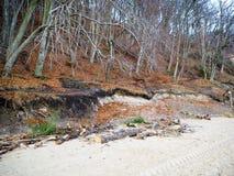 Песок леса и driftwood белый на береге Стоковое Фото