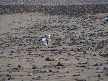 Песок и пляж камешков Стоковая Фотография