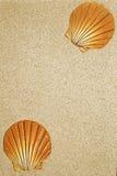 Песок и раковины Стоковое Изображение
