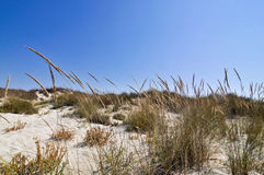 Песок и трава, Средиземное море Стоковые Изображения RF