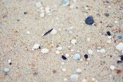 Песок и Seashells моря Стоковое Фото