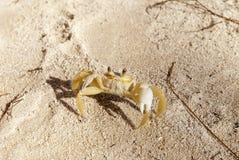 песок карибского рака защищая Стоковая Фотография