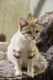 песок кота Стоковое Изображение