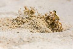 Песок краба призрака Chucking от отверстия Стоковое фото RF