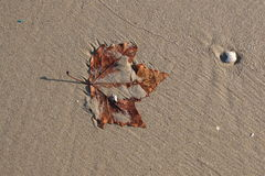 песок листьев Стоковое фото RF