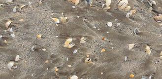 Песок моря и сломленные раковины стоковая фотография