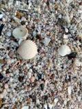 Песок от раковин Стоковые Изображения RF