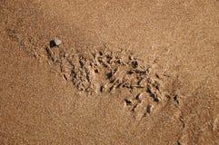 песок, песчинка, мытье, стоковое фото