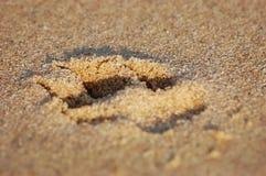 песок печати лапки Стоковая Фотография