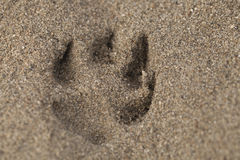 песок печати лапки Стоковые Изображения