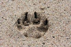 песок печати лапки Стоковое Изображение