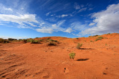песок пинка дюны коралла Стоковые Изображения