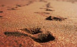 песок пляжа золотистый солнечный Стоковое Изображение RF