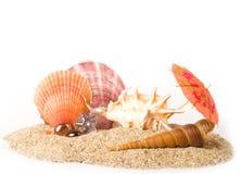 песок предпосылки экзотический обстреливает starfish Стоковые Изображения RF