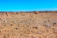 Песок пустыни в Африке стоковые изображения rf