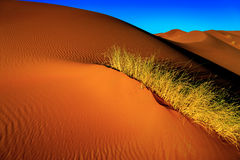 Песок пустыни Сахары Стоковое Фото