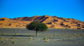 Песок пустыни Сахары Стоковые Фотографии RF