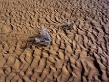песок пульсаций картины дюн крупного плана красный Стоковое Изображение