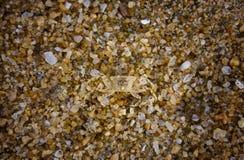 песок рака малюсенький Стоковые Изображения RF