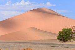 песок России kurshskaya kosa горизонта дюн шагает протягивающ к Стоковые Изображения RF