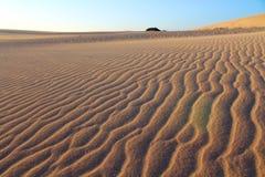 песок России kurshskaya kosa горизонта дюн шагает протягивающ к Стоковые Изображения