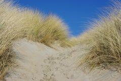 песок России kurshskaya kosa горизонта дюн шагает протягивающ к Стоковое Фото