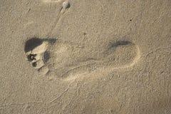 песок следа ноги Стоковое Изображение RF