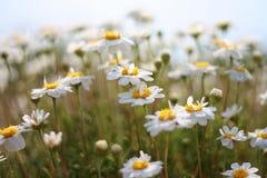 песок цветка Стоковая Фотография RF