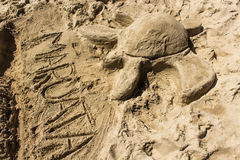 Песок черепахи на пляже Стоковые Фото