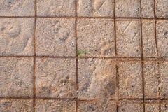 Песок ячеистой сети земной стоковые изображения rf