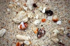песок galapagos Стоковые Фотографии RF