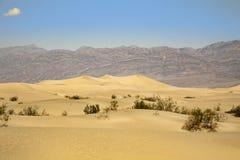 песок mesquite дюн плоский Стоковые Фотографии RF