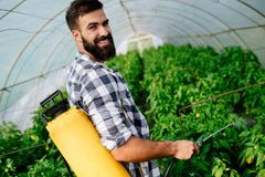 Пестициды молодого работника распыляя на плантации плодоовощ Стоковое Фото