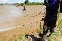Пестицид брызга хуторянина на поле риса стоковое изображение rf