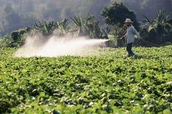 Пестицид хуторянина распыляя на поле стоковое фото rf