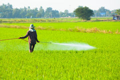 Пестицид фермера распыляя стоковая фотография