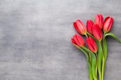 Пестротканая весна цветет, тюльпан на серой предпосылке Стоковые Изображения RF