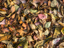 Пестротканая картина листьев Стоковое Изображение RF