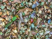Пестротканая картина листьев Стоковое Фото