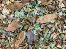 Пестротканая картина листьев Стоковые Изображения