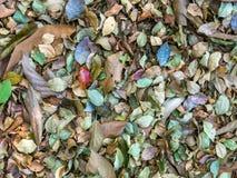Пестротканая картина листьев Стоковая Фотография