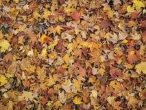 Пестротканая кровать листьев осени Стоковые Изображения