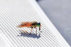 Пестротканая муха сидит на поверхности пластичной шлюпки Стоковое Фото